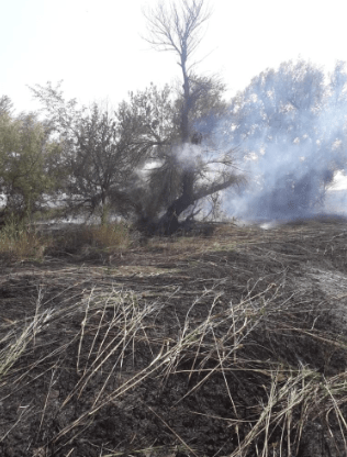 Пожарные потушили горящую стерню на площади 30 га на Ставрополье