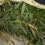 В Кисловодске выявили факт незаконного оборота наркотических средств