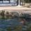 """Странный человек плавал в """"Зеркальном пруду"""" Кисловодска в холодной воде"""