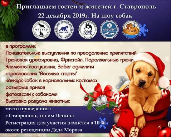Забег в карнавальных костюмах и выставка-конкурс собак в Ставрополе