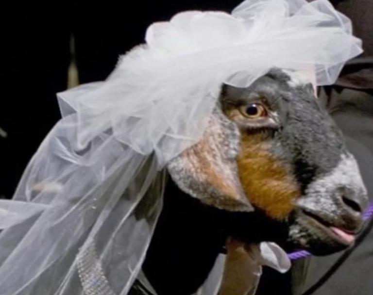 Поздравление на свадьбу сына невестке от свекрови все серии надо