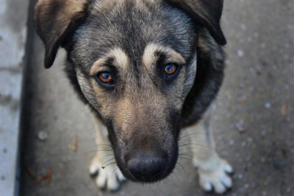 Хулиганы расстреляли бездомную собаку в Северной Осетии
