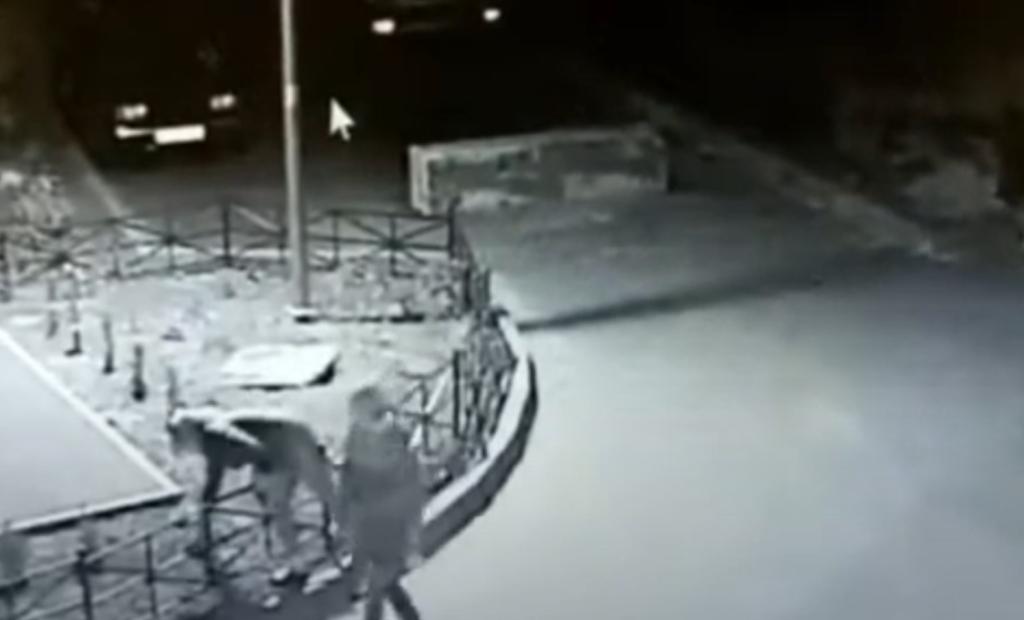 Злоумышленники украли туи, которые сажала мать бывшего мэра Ставрополя