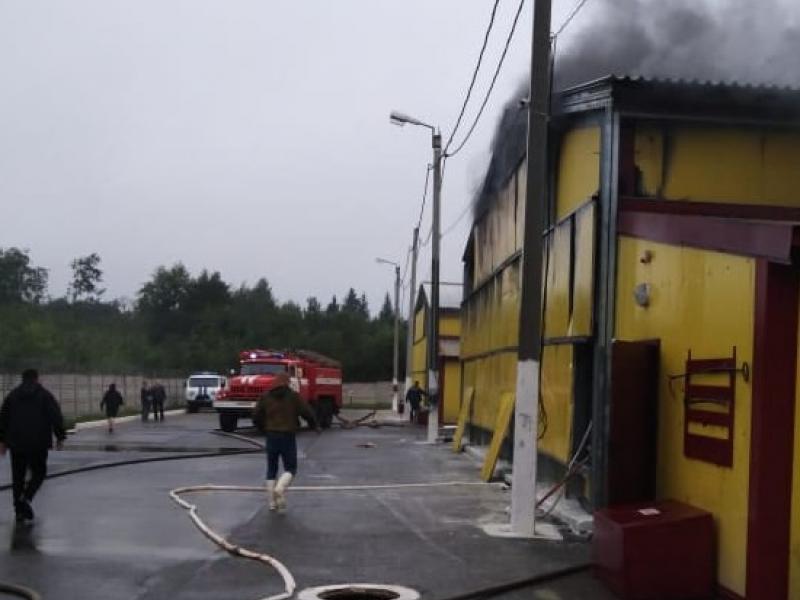 140 тысяч цыплят погибли во время крупного пожара в Нижегородской области