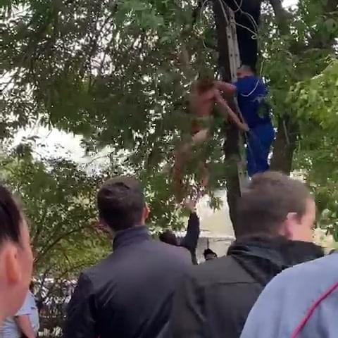 Прыгнул на дерево и справил нужду мужчина в Буденновске