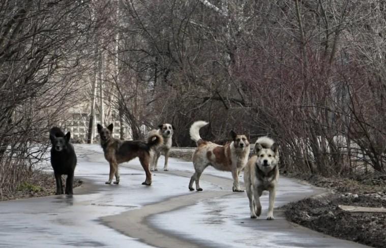 Жителям Светлограда не дает прохода стая бездомных собак