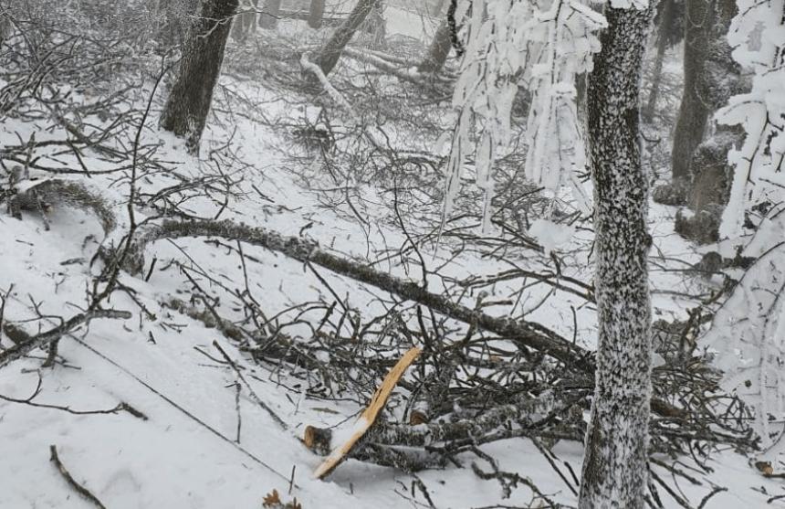 В Железноводске продолжаются работы по расчистке терренкуров