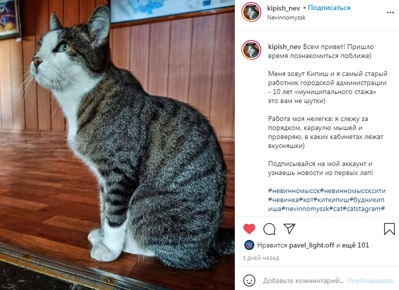 Страницу в Инстаграм завел кот из администрации Невинномысска