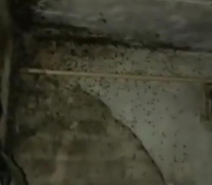 Кишащая тараканами квартира шокировала ставропольчан