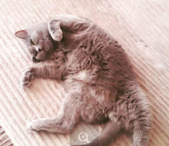 Флешмоб запустил кот из администрации Невинномысска